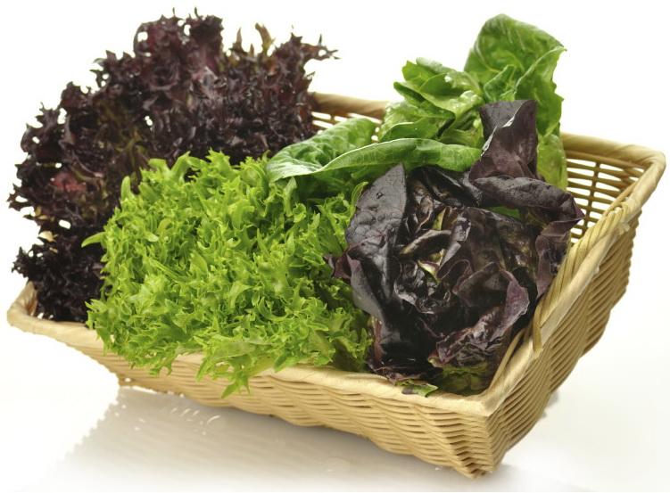 lettuce_varieties11